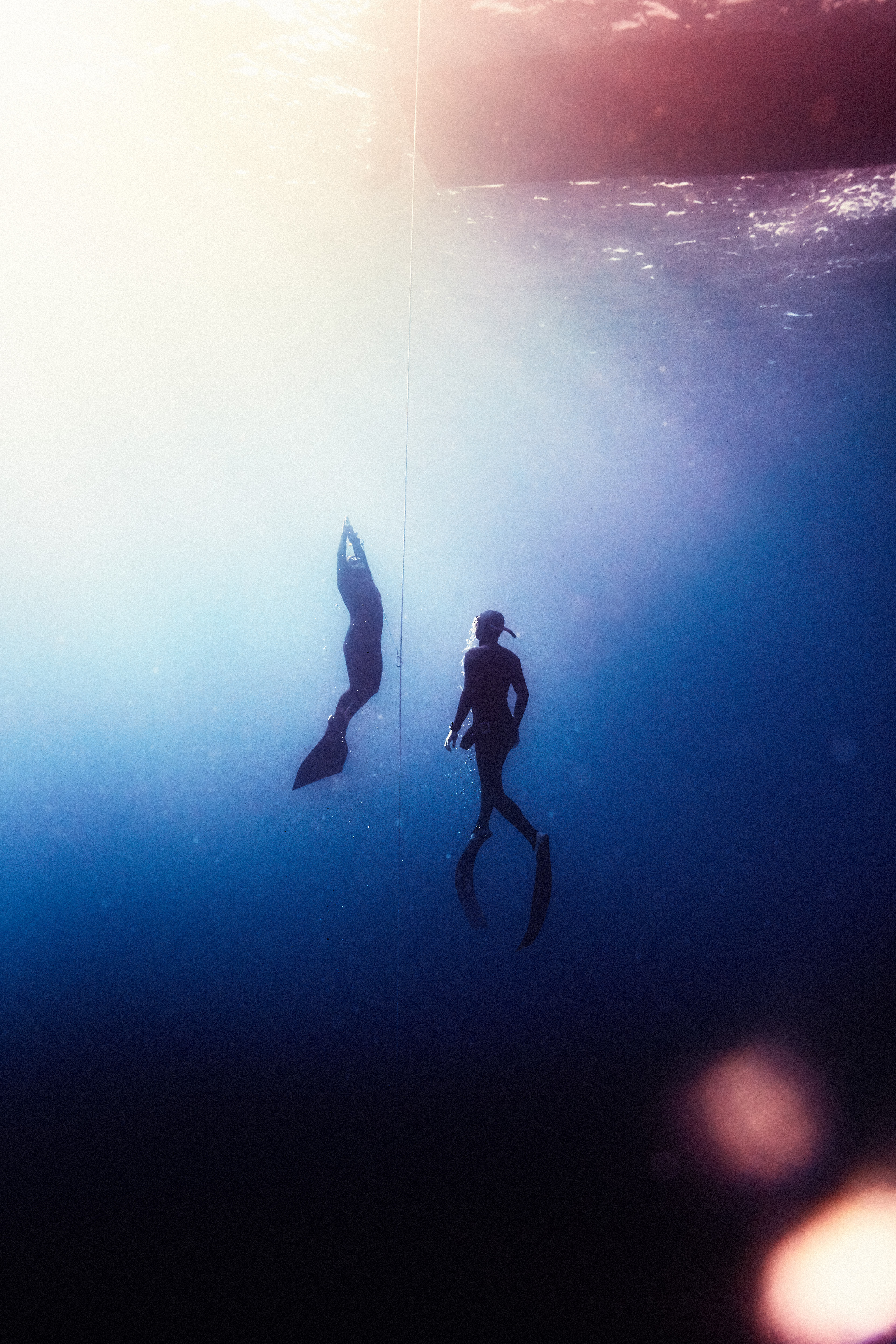 Freedive Roatan Honduras - Julian Walter Photography